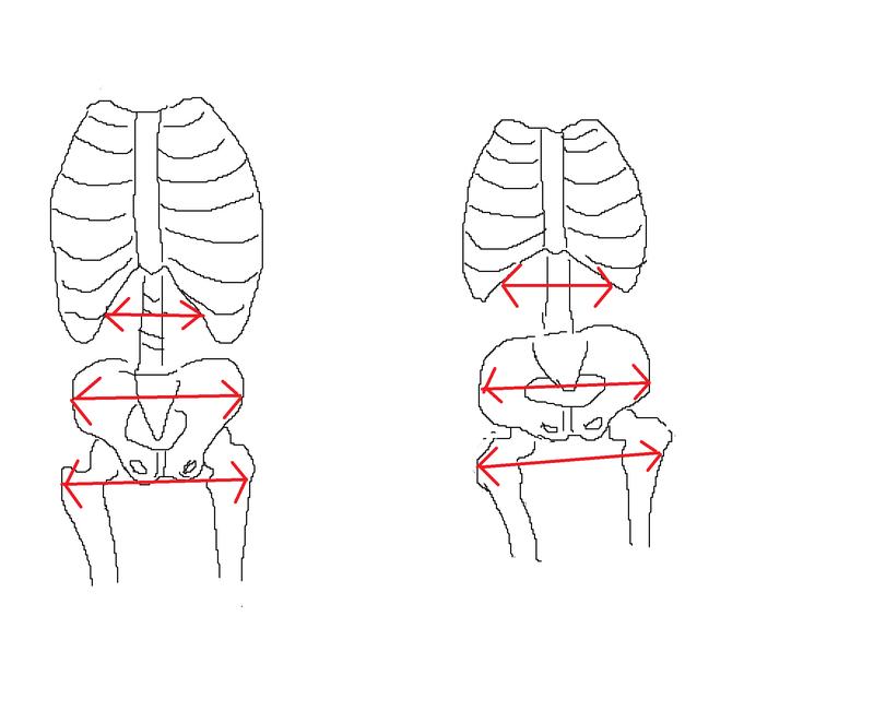 産後_骨盤と胸膈の開き