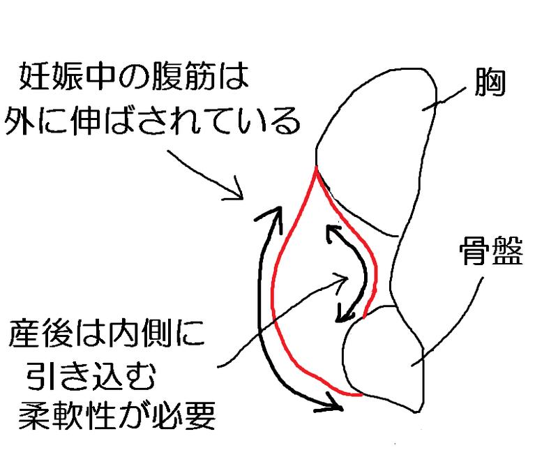 妊婦_腹筋のゆるみ