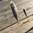 SUPにシーカヤックに釣りにBBQ!!!夏の海万歳!!!の記事より