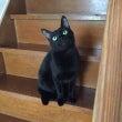 黒猫カルテット