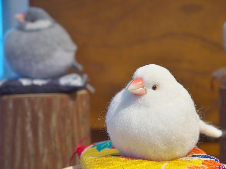 文鳥餅2羽