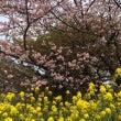 春‼︎新生活(*゚∀…