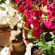 *お庭の花たち