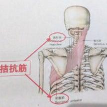 肩甲骨の間開いて肩コ…