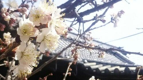 PicsArt_03-13-02.55.35.jpg