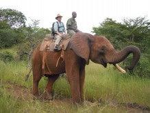 ElephantRide1