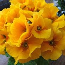 春のお花 & 絵本袋
