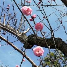 * もうすぐ春のはず…