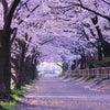 桜と乳癌検診の画像