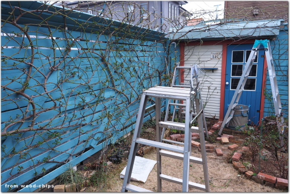 バラの庭 冬作業 誘引 立川市