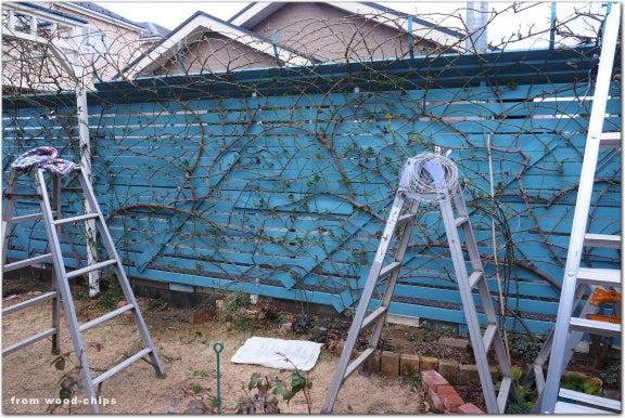 バラの庭 冬作業 誘引