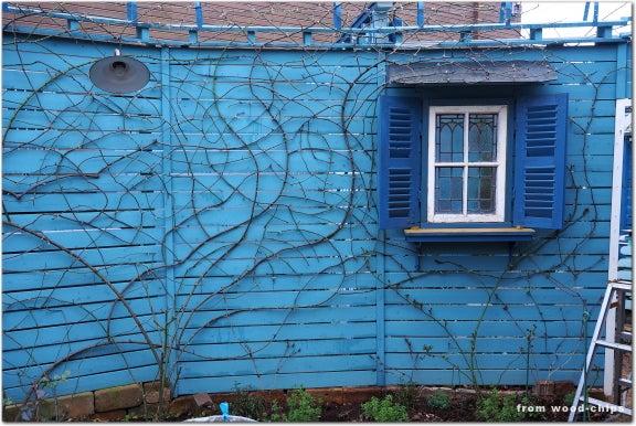 バラの庭 冬作業 誘引 小平市