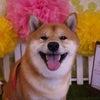 柴犬・チェーン・カフェマナー・・・かわいいけど、簡単じゃない!の画像