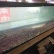 ミナミイシガメ