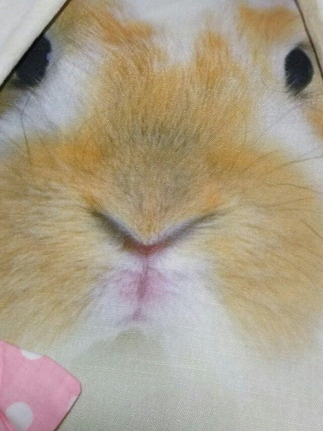 ウサギ耳付きクッション