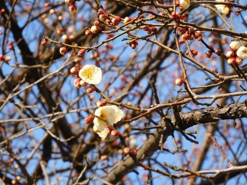 神社の春と空2
