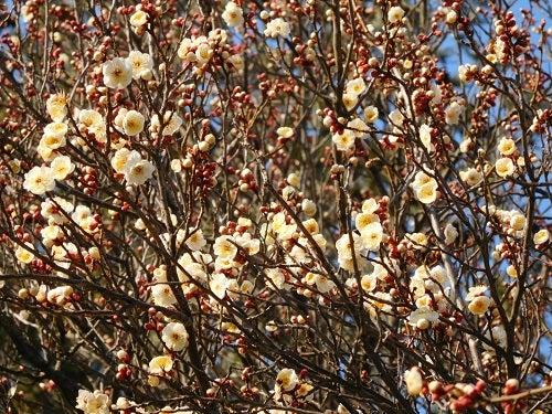 神社の春と空3