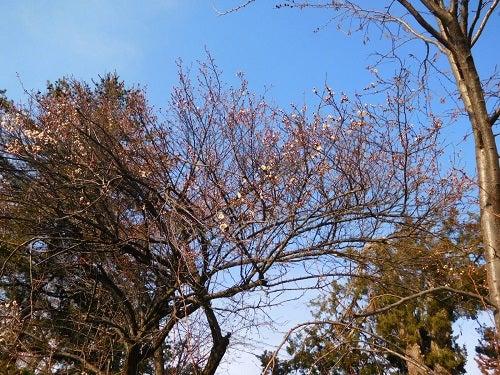神社の春と空1