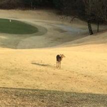 姉妹でゴルフ
