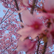 桜も空も綺麗~