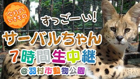 【けものフレンズ】グリコ看板風のサーバルちゃん!