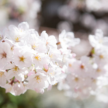 春に使える英語のフレ…
