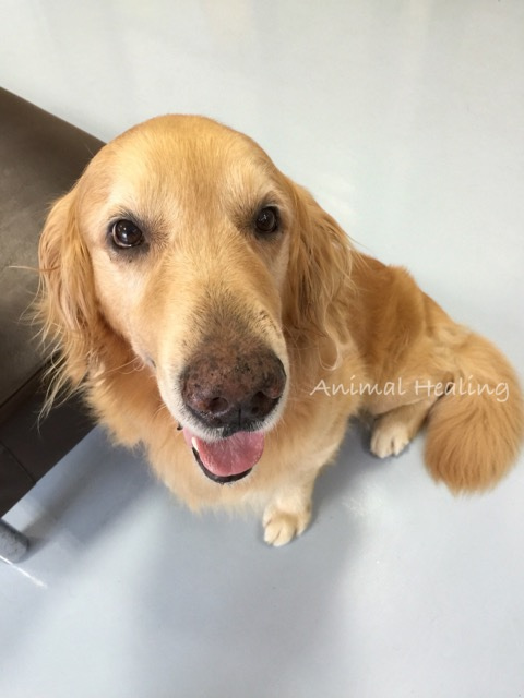 アニマルヒーリング 犬