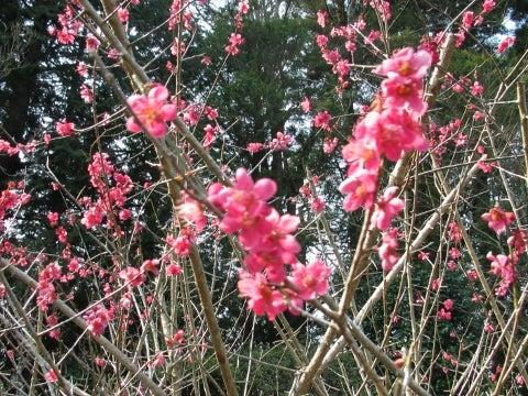 2017年3月19日・福泉寺・花3