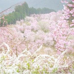 【募集告知】KAZUTO先生の「山をピンクに染めるしだれ桜を幻想的に撮ろう!」の画像