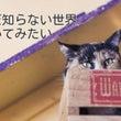 短いの(._.)