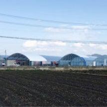 いちごの新農場が竣工…