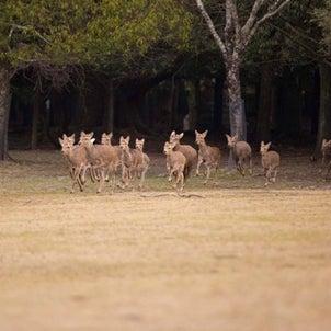 SHA.sha.PAKU vol.36「鹿寄せで鹿まみれ撮影会♪」レポートの画像