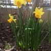 春っぽくなってきましたの画像