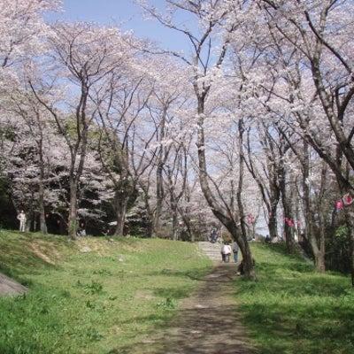 ✨八幡東区・八幡西区のお花見スポット✨の記事に添付されている画像