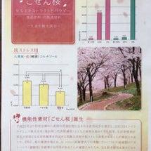 桜ヨガ(新プログラム…