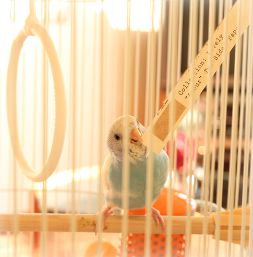 前田京子のペーパーフラワー、ペーパーアート、ペーパークラフト