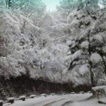 今シーズン一番の積雪…