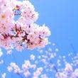 4月になったらお花見…