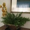 ローズマリーの画像