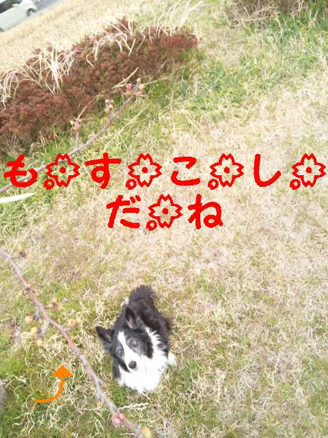 170328_163234_ed.jpg