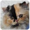 猫になりたい・・・