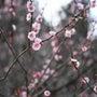 満開の桜が見える物件…