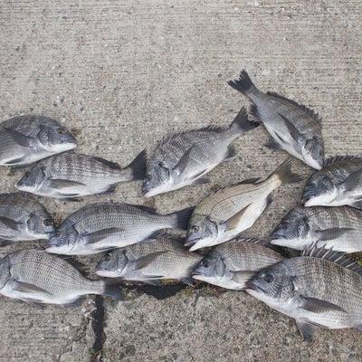 チヌの沈め釣り(ズボ釣り)についての記事に添付されている画像