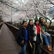 済州の春便り