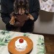 チョコ誕生日