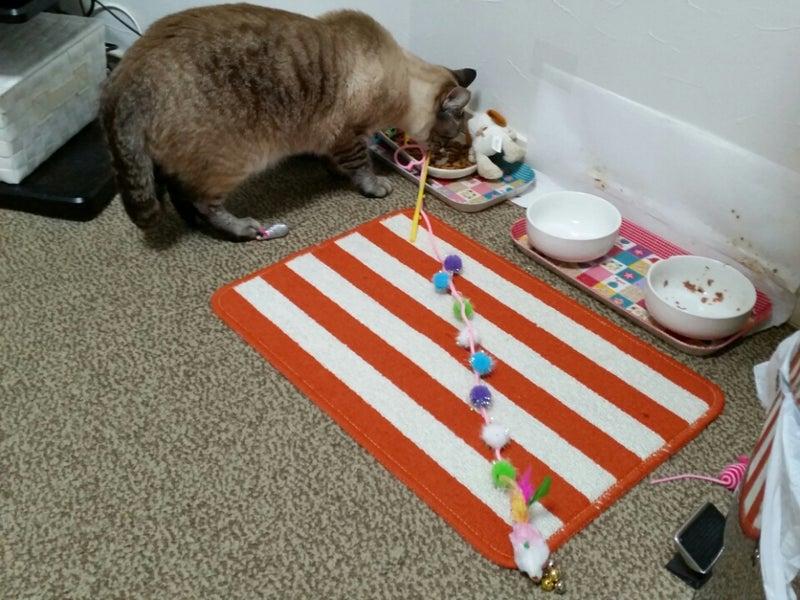 猫の餌場にオモチャを集める習性...