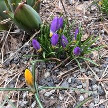 春、発見!
