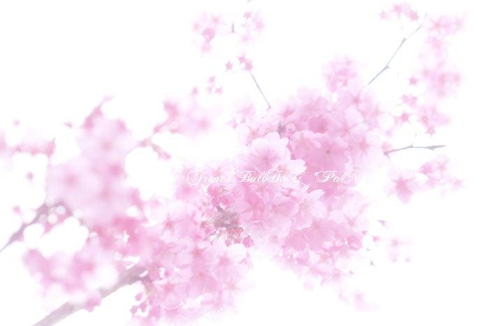 フレブルパン 桜