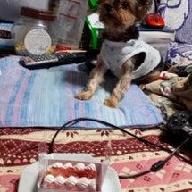 我が愛犬ちゃんもシニ…