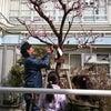 校庭の木に名札をつけてあげよう!の画像